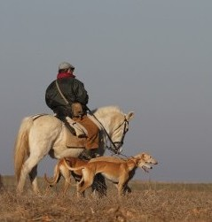 Relación entre actividades humanas y fauna silvestre
